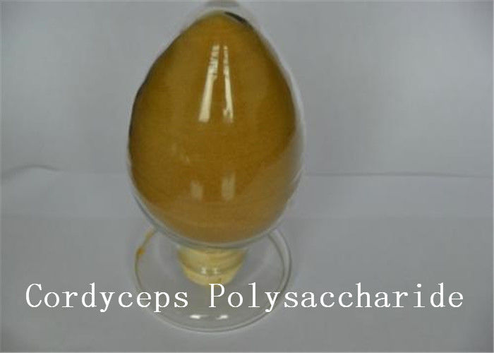 Cordyceps Natural Plant Extracts Polysaccharide Cordceps Sinensis Brown Yellow