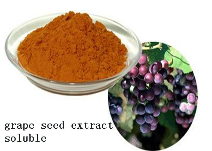 Heart Health Natural Plant Extracts Proanthocyanidins OPC Soluble Grape Seed